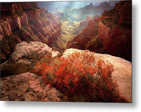 North Rim Flora by Mikes Nature