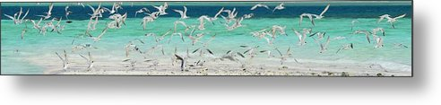 Scenics Metal Print featuring the photograph Flock Of Seagulls By Azure Beach by Christopher Leggett