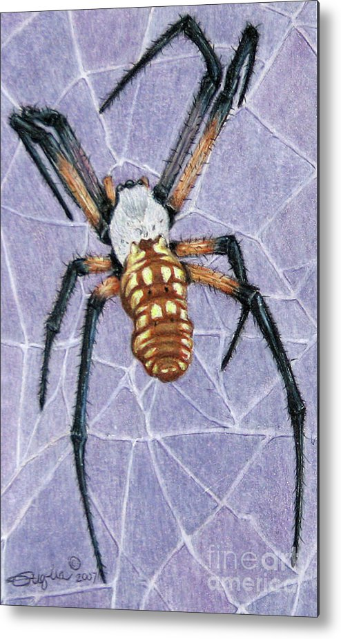 Fuqua - Artwork Metal Print featuring the drawing Female Orb Spider by Beverly Fuqua