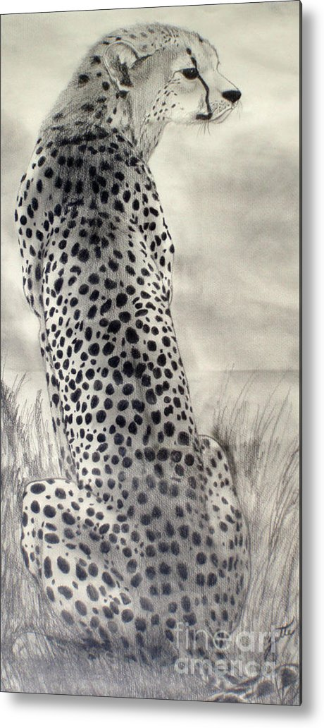 Cheetah Metal Print featuring the drawing Cheetah by Suzette Kallen