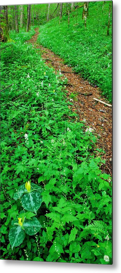 Wildflower Trail Metal Print featuring the photograph Baxter Creek Trail by Alan Lenk