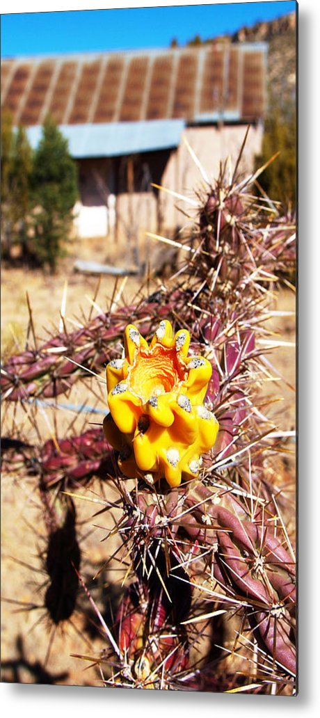 Photo Metal Print featuring the photograph Rural Attitude by James Granberry
