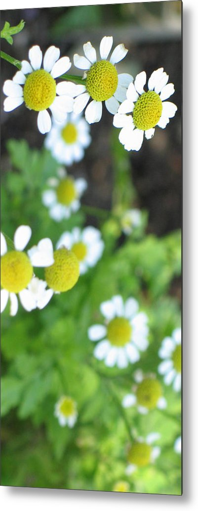 Spring Metal Print featuring the photograph Spring Time by Ria Razzauti