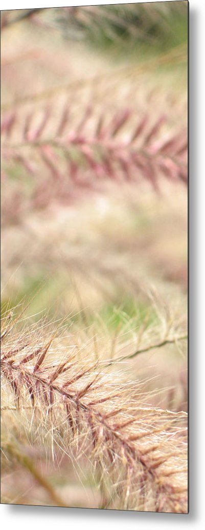 Weeds Metal Print featuring the photograph Weeeeeds by Ria Razzauti