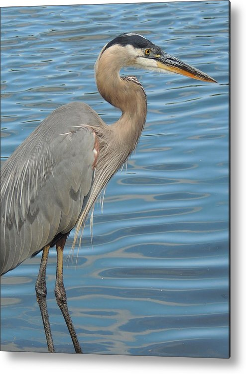 Nature Metal Print featuring the photograph Blue Day by Lucy Howard