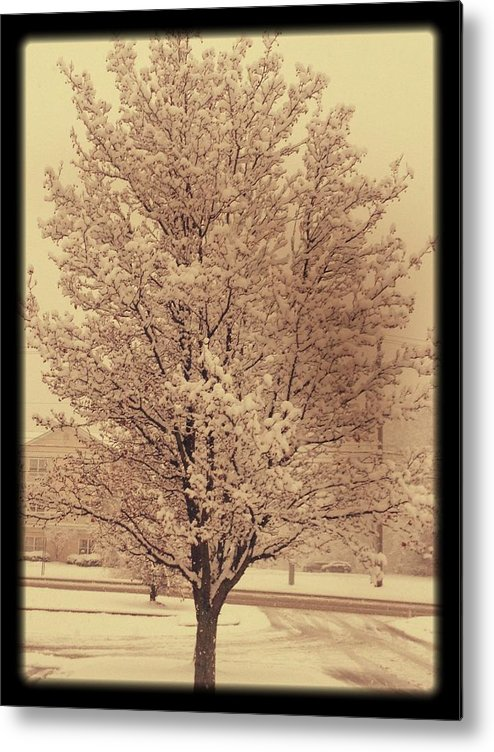 Tree Metal Print featuring the photograph A Cold Winters Day by Stacey Mills