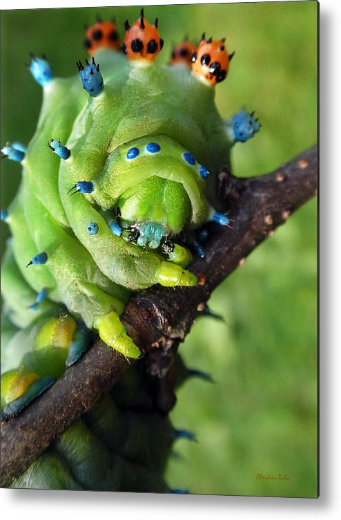 Alien Nature Cecropia Caterpillar Metal Print by Christina Rollo