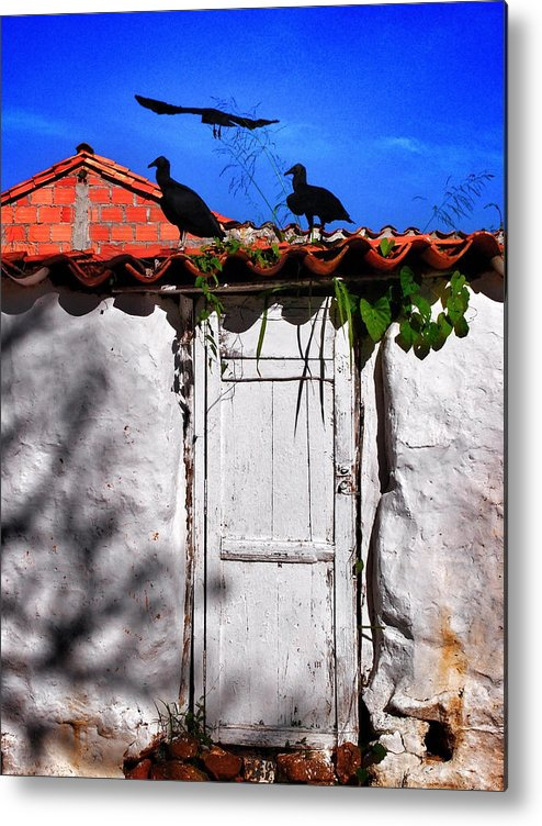 Amigos Negros Metal Print featuring the photograph Amigos Negros by Skip Hunt
