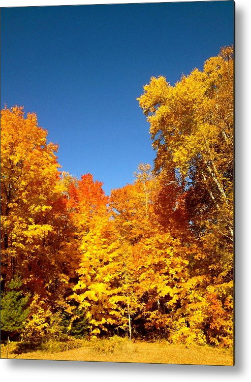 Minnesota Metal Print featuring the photograph An Autumn Of Gold by Danielle Broussard