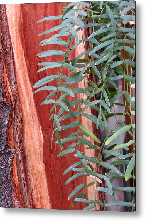 Tree Metal Print featuring the photograph Branches And Bark by Laurel Powell