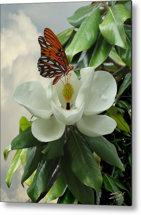 Magnolia Metal Print featuring the photograph Butterfly On Magnolia Blossom by IM Spadecaller