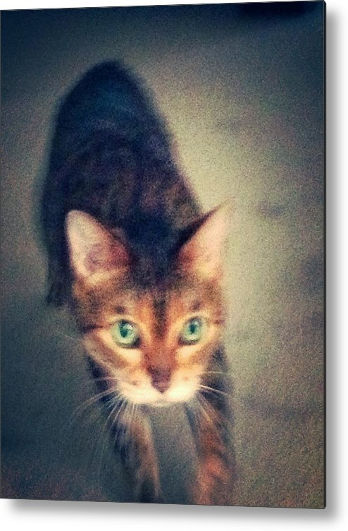 Cat Metal Print featuring the photograph Cat by Hannah Limoges