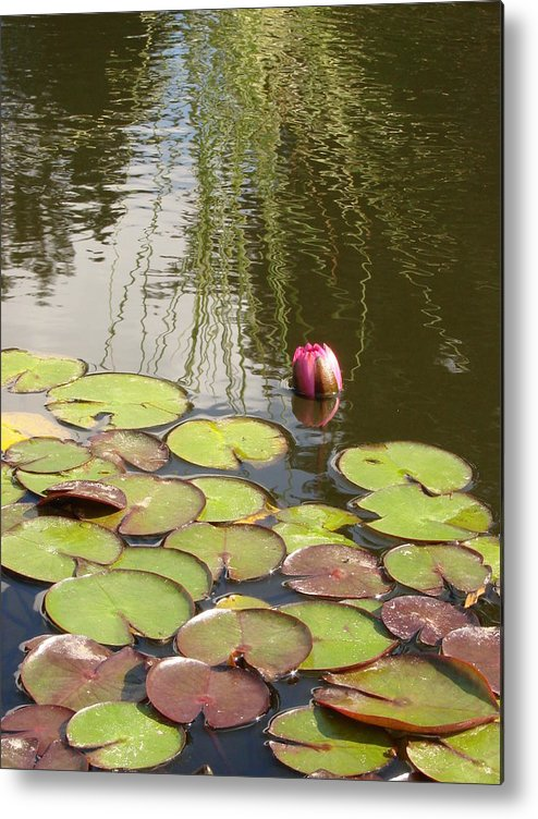 Water Lilly Metal Print featuring the photograph Circles And Curls by Pat Lopez