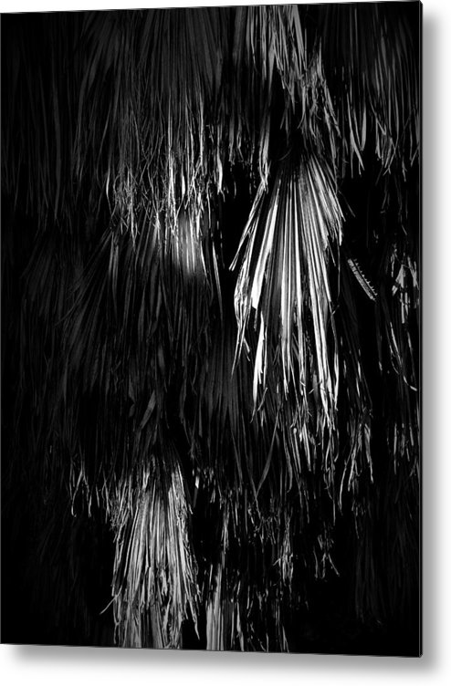 Black Metal Print featuring the photograph Dead Fronds by Phil Penne