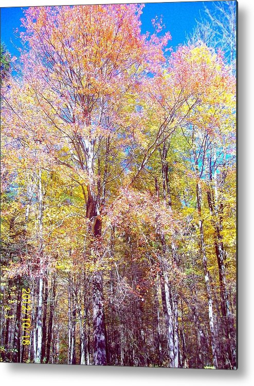Landscape Metal Print featuring the photograph Dressed For Fall by Linea App