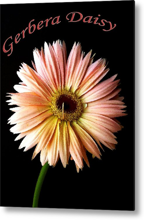 Flower Metal Print featuring the photograph Dscn6163a by Kimberlie Gerner