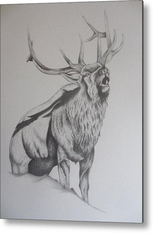 Mountain Elk Metal Print featuring the drawing Elk by Pete Garcia