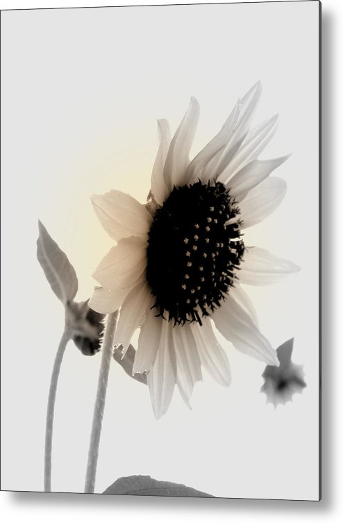Floral Metal Print featuring the photograph Fading Sun by Mickey Murphy
