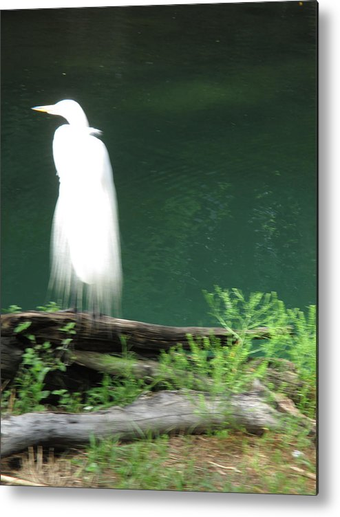 Water Metal Print featuring the photograph Ghost Bird by Eric Baierl