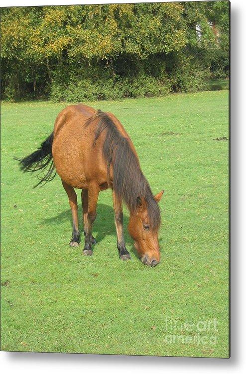 Pony Metal Print featuring the photograph Grazing Chestnut Pony by DejaVu Designs