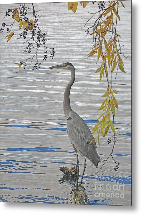 Heron Metal Print featuring the photograph Great Blue Heron by Ann Horn