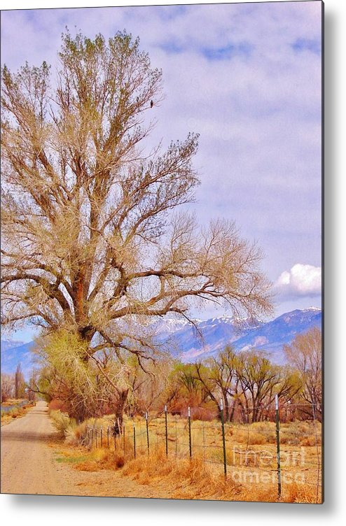 Hawk Metal Print featuring the photograph Hawk Overlooking by Marilyn Diaz