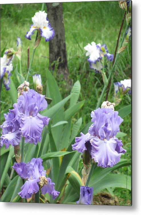 Iris Metal Print featuring the photograph Hidden Iris by Iris Prints