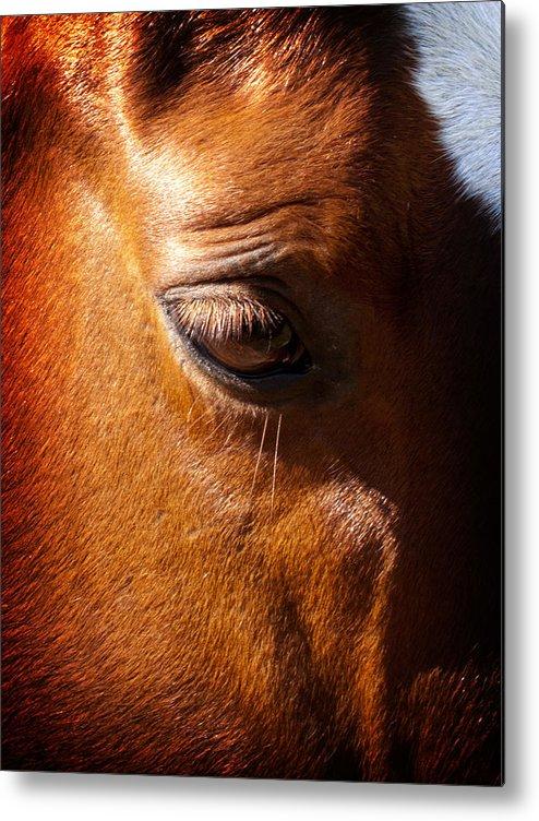 Horse Metal Print featuring the photograph Horse Profile by Joe Carini