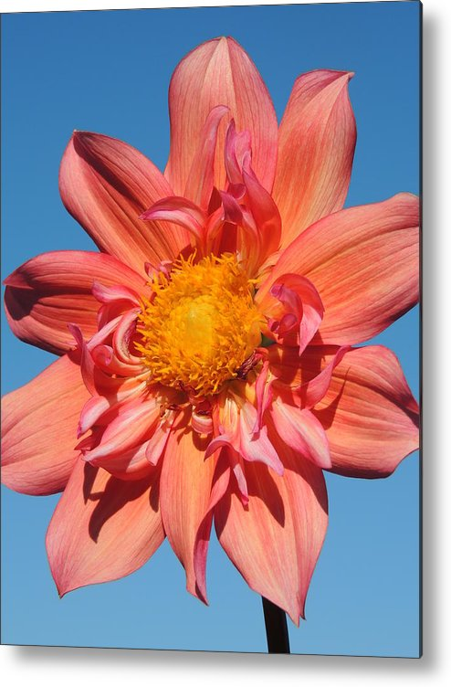 Nature Metal Print featuring the photograph In The Sky by Lucy Howard