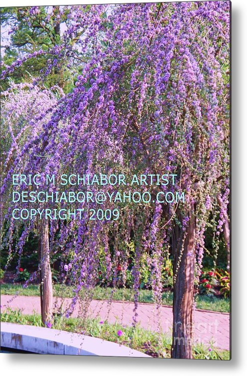 Butterfly Bush Metal Print featuring the photograph Lavender Butterfly Bush by Eric Schiabor