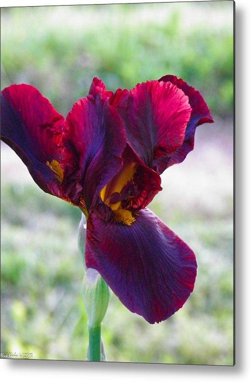 Iris Metal Print featuring the photograph Maroon Iris by Nick Kirby