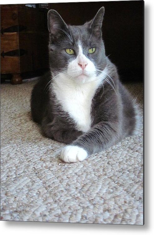 Guy Ricketts Photography Metal Print featuring the photograph Morty A Refined Gentleman by Guy Ricketts