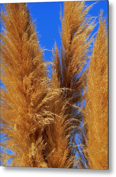 Pampas Metal Print featuring the photograph Pampas Grass by Jeff Lowe