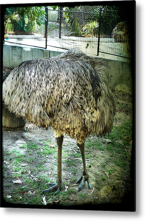 Emu Metal Print featuring the photograph Peek-a-boo by Therese Alcorn