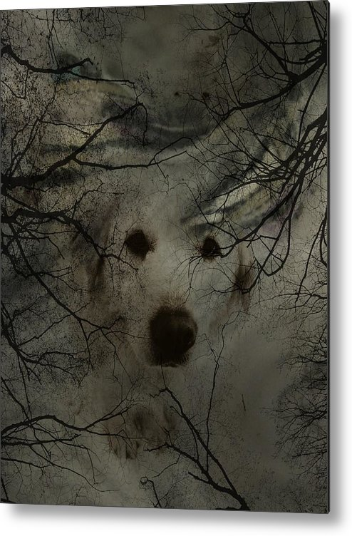 Dog Metal Print featuring the photograph Phantom Dog by Shirley Sirois