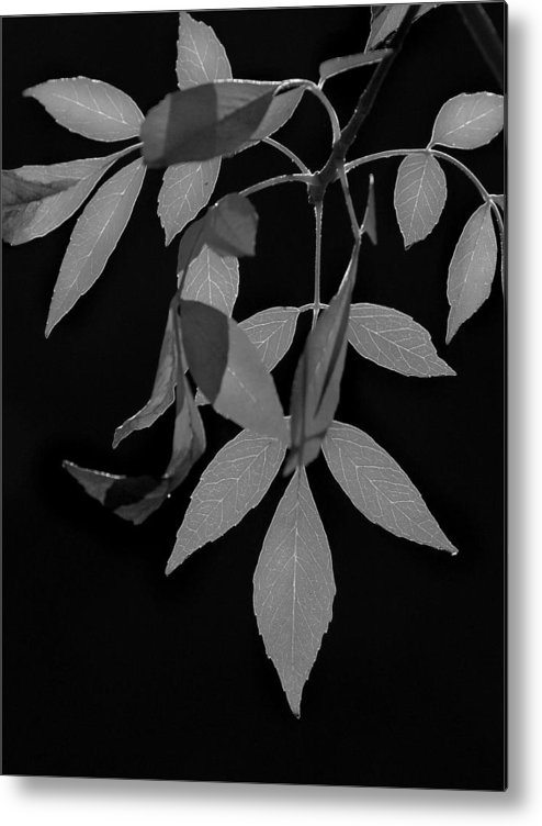 B&w Metal Print featuring the photograph Phoenix Fall 05 by Jeff Brunton