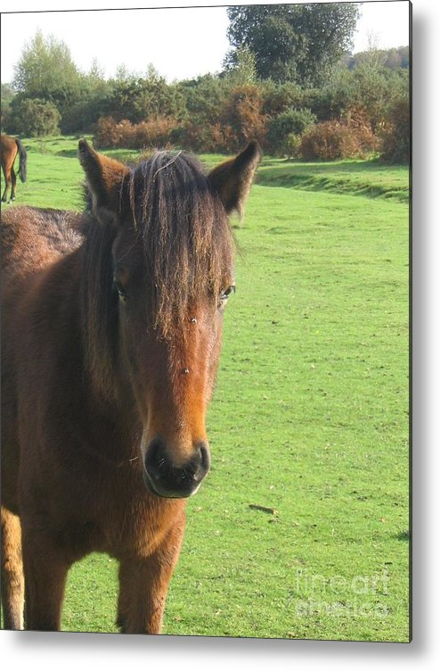 Pony Metal Print featuring the photograph Pony On The Moors by DejaVu Designs