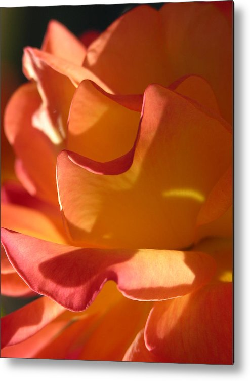 Rose Metal Print featuring the photograph Rose Of Light by Lucy Howard