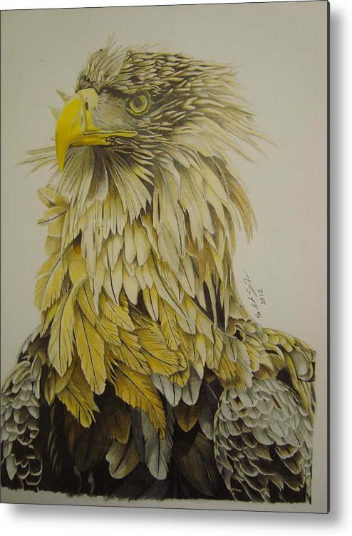 Birds Metal Print featuring the drawing Seaeagel by Per-erik Sjogren