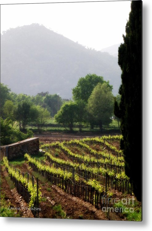 Vineyard Metal Print featuring the photograph Spring Vines In Provence by Lainie Wrightson