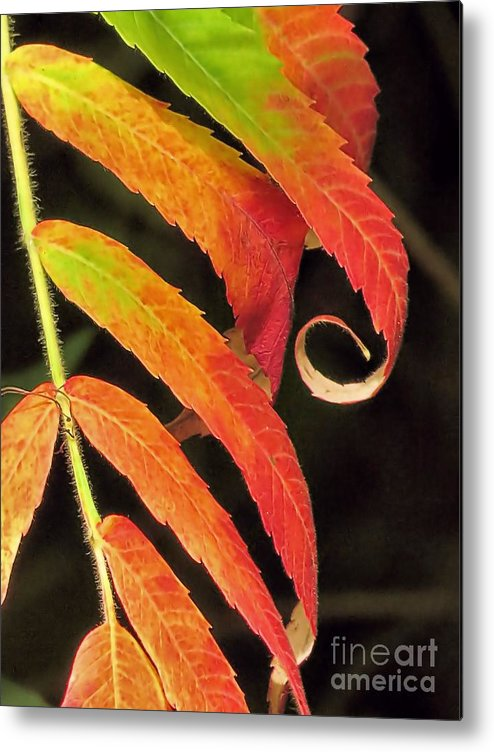 Staghorn Sumac Metal Print featuring the photograph Staghorn Sumac by Janice Drew