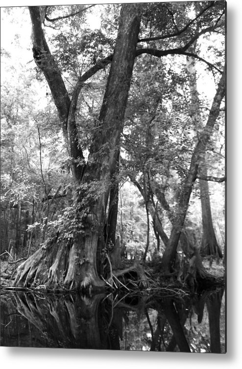 Strong Cypress Tree Along River. Metal Print featuring the photograph Strength by Amber Lopez