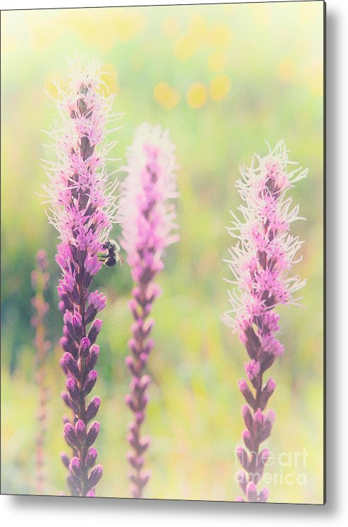 Blue Ridge Parkway Metal Print featuring the painting Summer Flowers Of The Blue Ridge Parkway II by Dan Carmichael