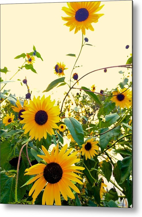 Sunflowers Metal Print featuring the photograph Sunny Sunflowers by Mike Morrison