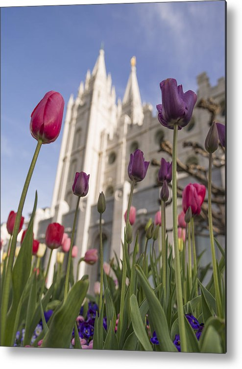 Temple Tulips Metal Print featuring the photograph Temple Tulips by Chad Dutson