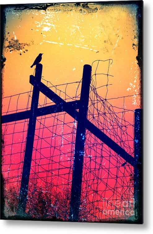 Evening Metal Print featuring the photograph The Night Keeper by Tara Turner