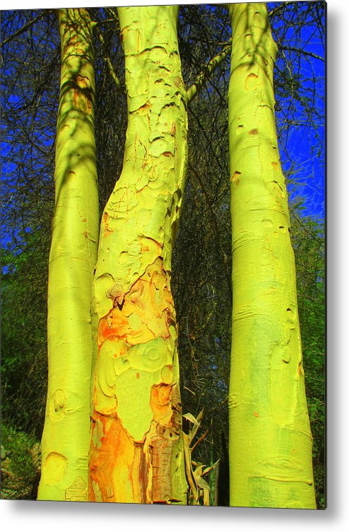 Bark Metal Print featuring the photograph Three Trees by Randall Weidner