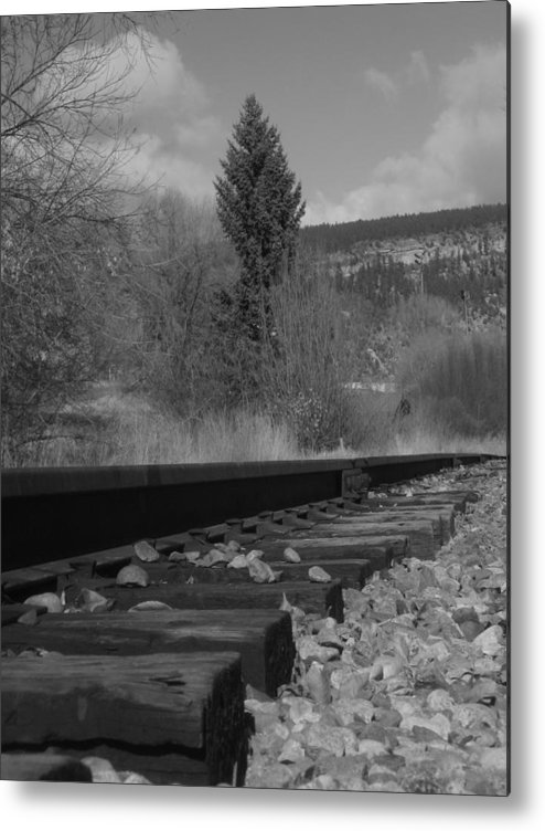 Black & White Photography Metal Print featuring the photograph Tracks And Trees by Kirk Griffith