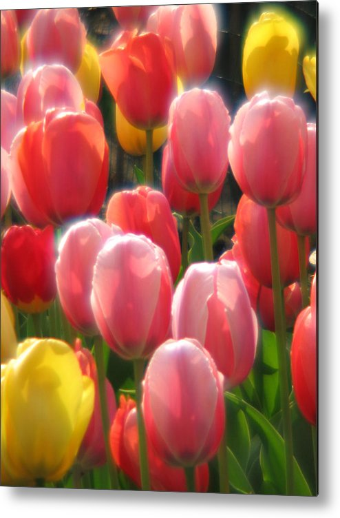 Tulip Metal Print featuring the photograph Tulip Chorus 	 by Sue Thomson