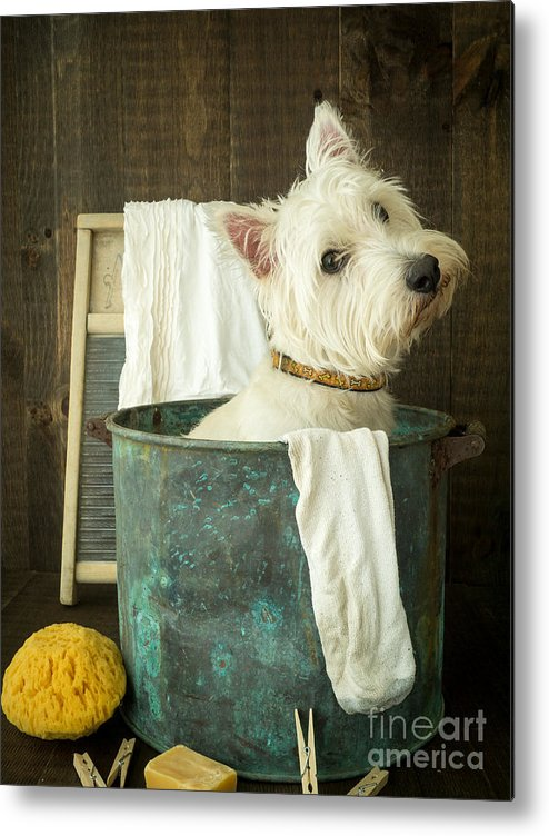 Dog Metal Print featuring the photograph Wash Day by Edward Fielding